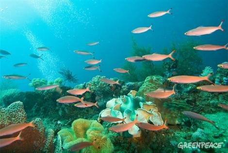 oceanos_greenpeace